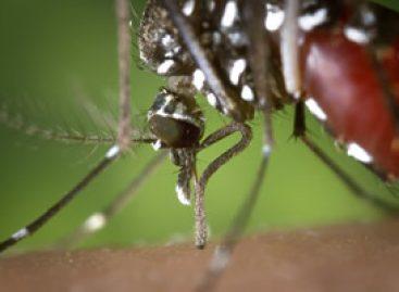 Im Kampf gegen den Zika Virus