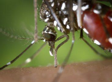 Zika im Urlaubsparadies Thailand