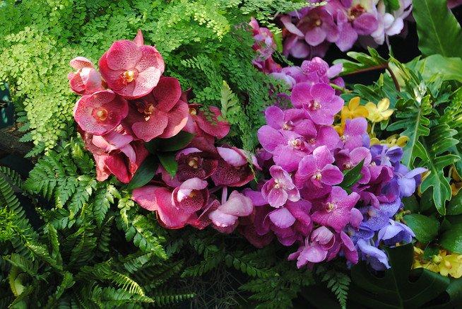 Blumen Festival Orchideen