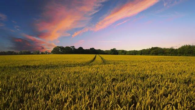 Intakte Böden sind Klimaschützer