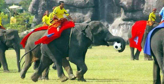 Surin die Elefantenstadt an der Grenze zu Kambodscha